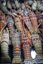 Spiny Lobsters (Palinuridae) At The Night Market - Kota Kinabalu Sabah Borneo Malaysia Asia
