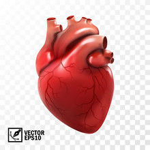 3d Realistic Vector Isolated H...