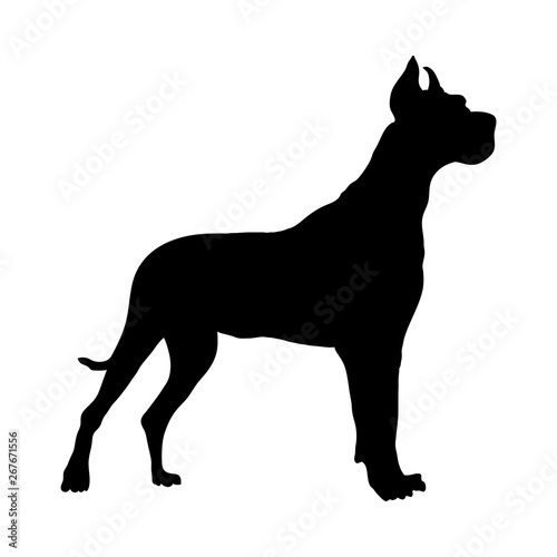 Fototapeta German Great Dane Dog Silhouette obraz