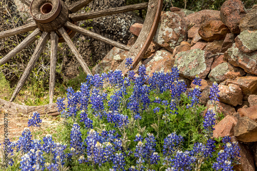 Willow City loop, Texan landscape in spring with wildflowers Wallpaper Mural