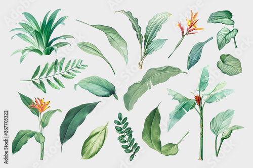 Fotomural Tropical leaves and plants