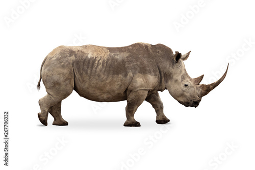 Spoed Foto op Canvas Neushoorn Large White Rhino Profile Big Horn Extracted