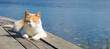 canvas print picture - red cat fell asleep on the pier, surrounded by water