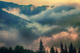 Fototapeta Na ścianę - Foggy morning landscape