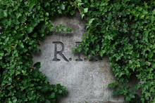 R.I.P.  Letters Engraved In Grey Stone Tombstone Framed With Lush Green Ivy