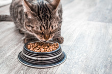 Portrait Of A Cat With A Bowl Of Dry Food. Eats Close Up. Copy Space