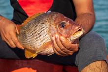 Fisherman Holding Medium Size ...