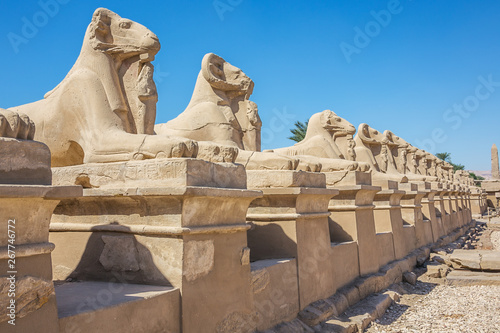 Spoed Fotobehang Egypte Looking down at the Avenue of the Sphinxes from the Temple of Karnak