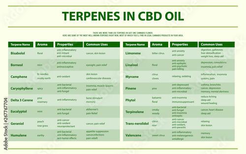 Terpenes in CBD oil horizontal infographic - Buy this stock