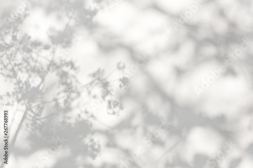 Obraz trees branch and leaf with shadow on a white concrete wall. Leaf pattern. Blurred background. - fototapety do salonu