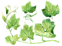 Set Of Watercolor Leaves. Hand...