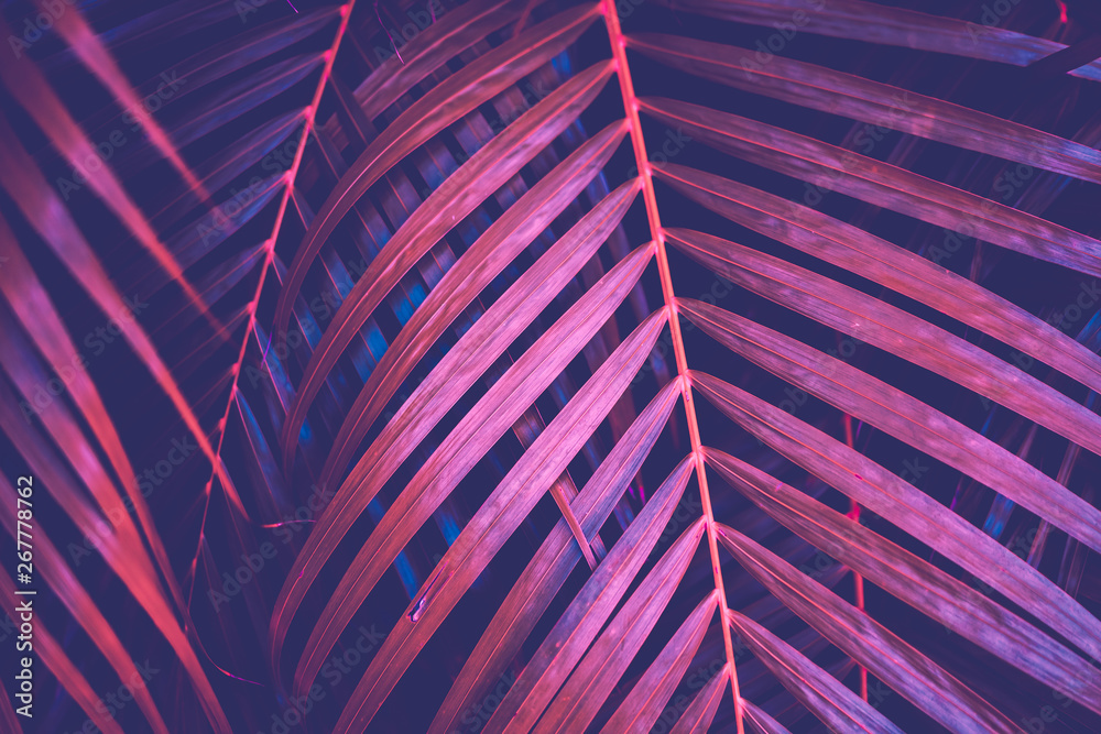 Fototapety, obrazy: Copy space pink tropical palm tree on sky abstract background. Summer vacation and nature travel adventure concept.