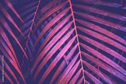 Photo  Copy space pink tropical palm tree on sky abstract background