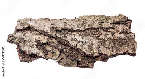 piece of tree bark on isolated white background