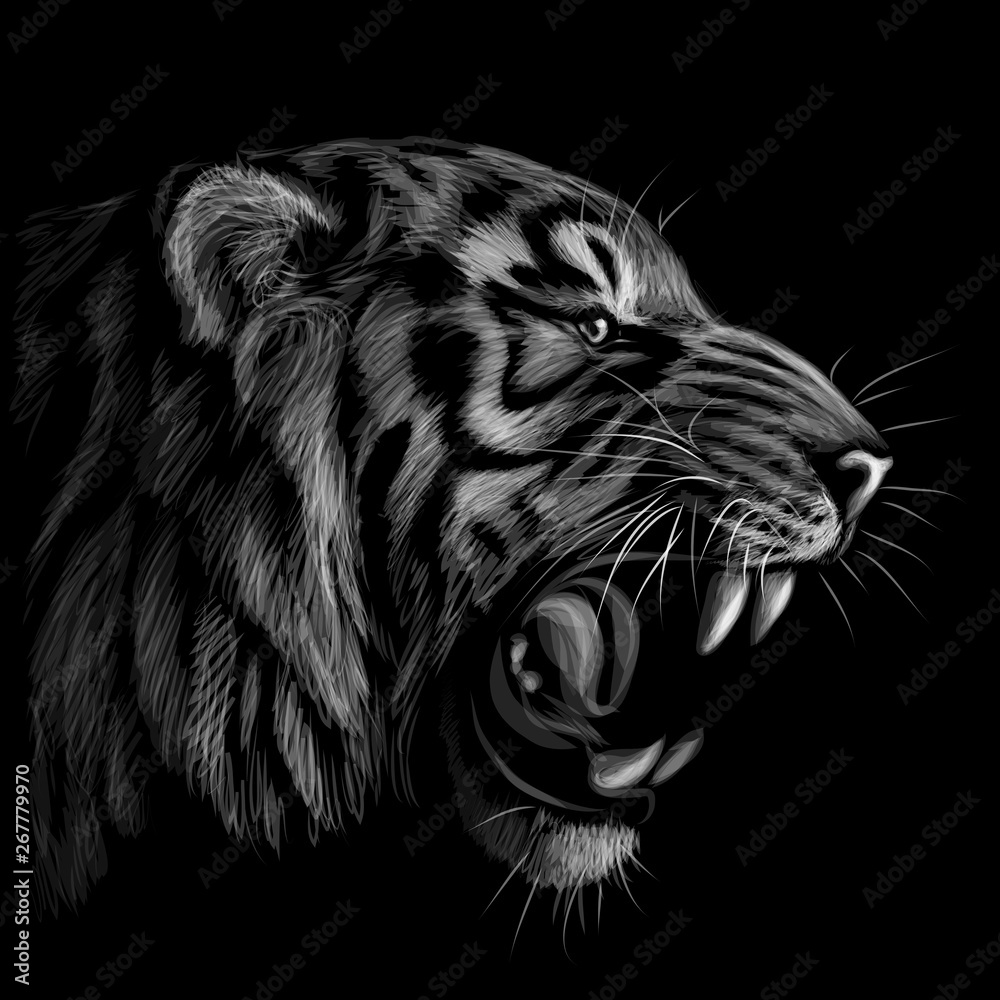 Fototapeta Black and white portrait of a tiger on a black background.