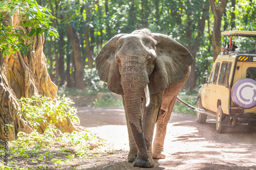 Photo Wild african elephant beeing observed by tourist from open roof jeep on wildlife safari