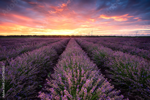 Lavender field at sunrise / Stunning view with a beautiful lavender field at sun Canvas-taulu