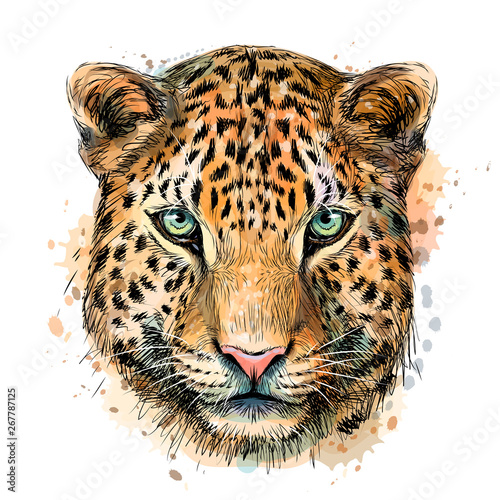 Fototapeta Sketch color portrait of Jaguar looking forward on a white background with splashes of watercolor