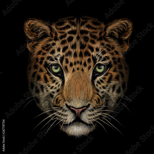 Fotografia, Obraz Color portrait of Jaguar/leopard looking forward on a black background