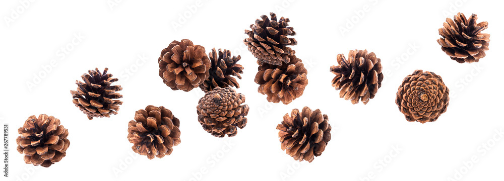 Fototapety, obrazy: Falling pinecones isolated on white background with clipping path