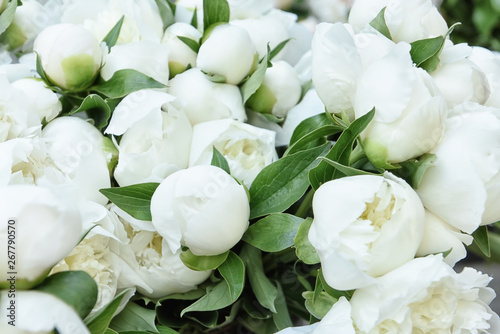 Wall Murals Lily of the valley White peonies flower buds. Close-up. Selective soft focus.