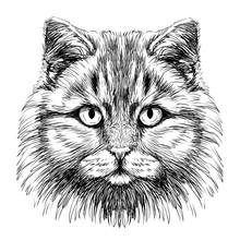Hand-drawn, Sketchy Portrait O...