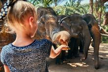 Little Girl Feeding A Banana T...