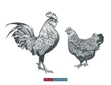 Hand Drawn Rooster And Chicken...