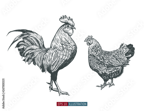 Fotografie, Tablou Hand drawn rooster and chicken isolated