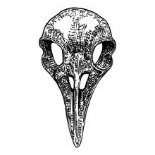 Crow Skull. Hand Drawn Bird Sk...