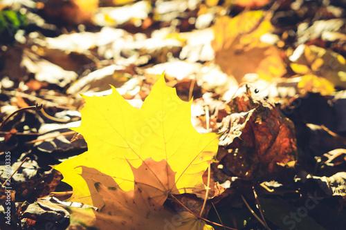 Montage in der Fensternische Gelb Vibrant fall foliage