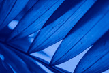 Abstract blue floral blurred background. Tropical palm leave backdrop - 267817921