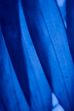 Abstract blue floral blurred background. Tropical palm leave backdrop - 267817981