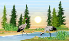 Two Gray Cranes On The Shore O...