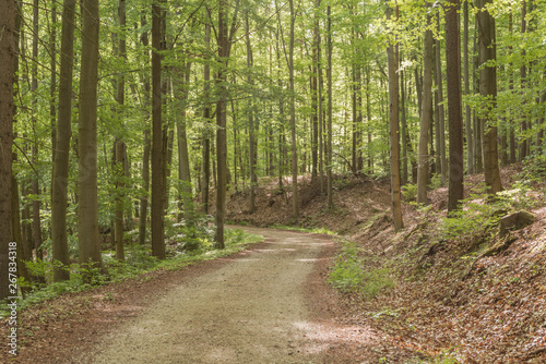 Photo Stands Road in forest Bukowy las wiosną.