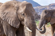 Two elephants in front of a mountain