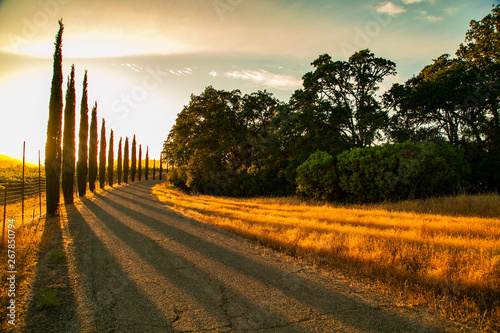 Sunset pine trees landscape