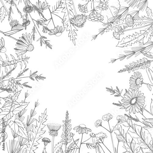 Obraz na plátně  Hand drawn medicinal herbs.Vector sketch  illustration.