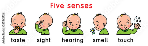 Five senses icon set. Fototapete