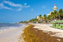 The Beach At Playa Del Carmen ...
