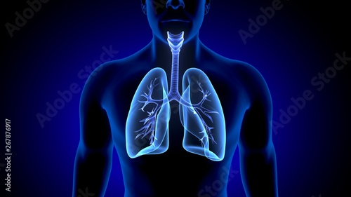 3d illustration of human body lungs anatomy Canvas Print