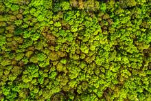 Tree Aerial