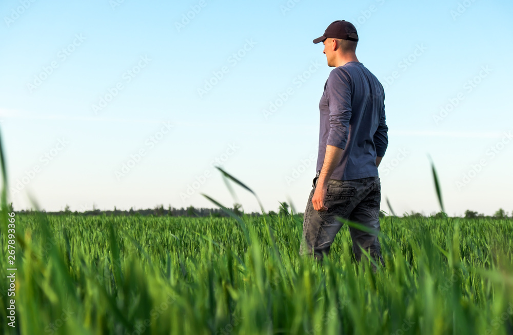 Fototapety, obrazy: Handsome farmer. Young man walking in green field. Spring agriculture.