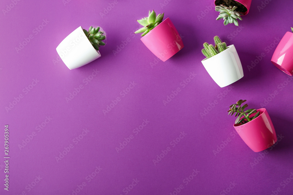 Fototapety, obrazy: Succulents and cacti in pots on color background, top view