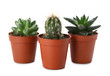 Succulents and cactus on white background