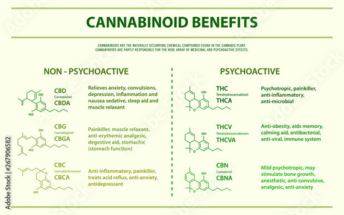 Cannabinoid Benefits horizontal infographic illustration about cannabis as herbal alternative medicine and chemical therapy, healthcare and medical science vector Wallpaper Mural