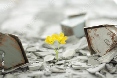 災害から月日が経ち瓦礫の中から緑や花が再生した街と人々 Canvas