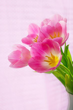 Vertical Photo Of Beautiful Pink Tulips, Brightly Lit By Sunlight Through The Blinds And Fabric Of Pink Color In The Background.