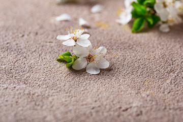 Fototapeta na wymiar Cherry blossom on beige background