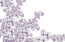 Lilac Flowers Vector Line Art. Vintage Retro Old Effect Style Illustrations